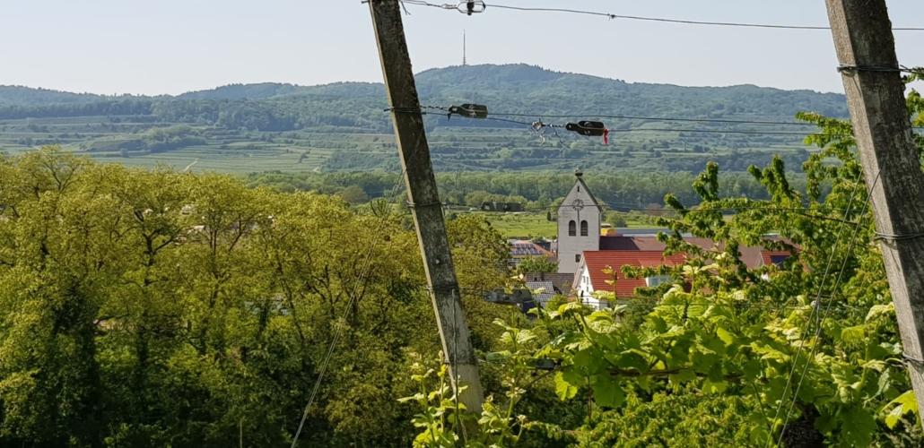 Zur Krone Gottenheim – Weinberg am Kaiserstuhl