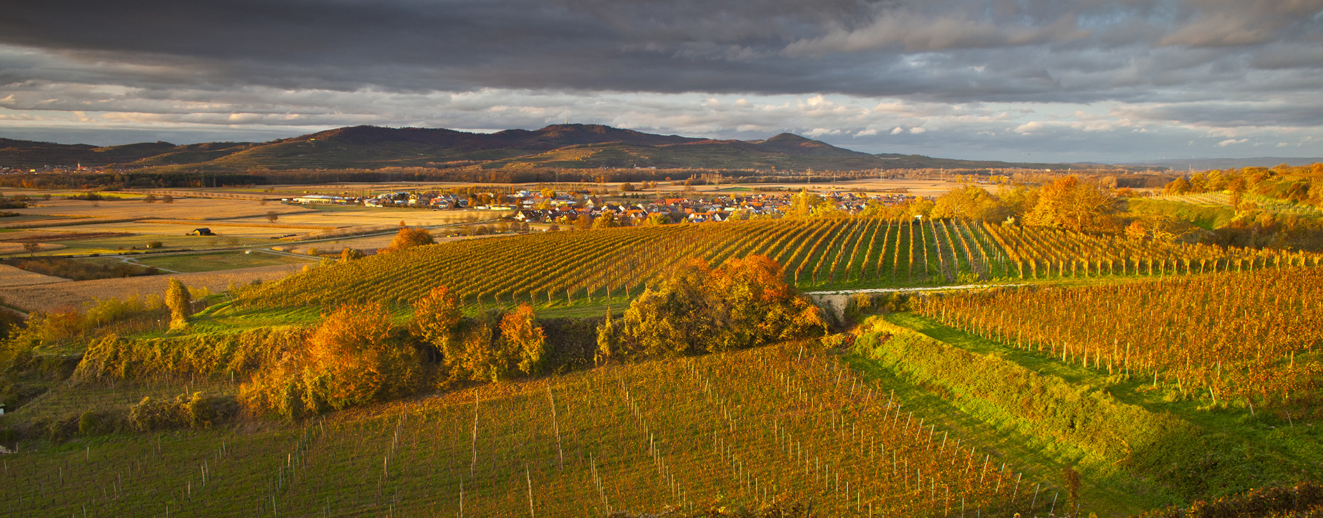 Traumhafte Landschaft, Weinberge und Kaiserstuhl